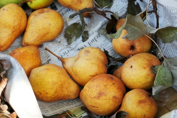 Foto: Pixaba.com